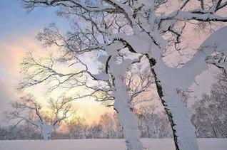 特に厳しい寒さだった北の大地にも、ようやく明るい日差しが増えてきた(北海道喜茂別町)=北海道支社