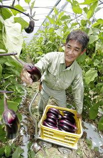 約70アールの畑を一人で切り盛りする新垣さん。「野菜は、厳しすぎてもいけないし、甘やかしてもいけない……。人材育成と一緒。自分の信心が試されます」