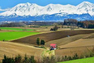 十勝岳連峰の麓、富良野盆地の丘陵地帯。トラクターが耕した大地と、秋まき小麦や牧草が織りなすコントラストが、まるでパッチワークのように美しい(北海道美瑛町)=北海道支社