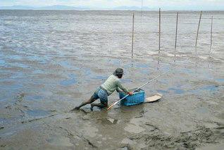 ムツゴロウの漁を終えて戻ってくる漁師さん(2015年7月)