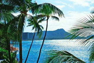 池田先生が「世界広布の第一歩」をしるしたハワイ。ヤシの向こうに名勝「ダイヤモンドヘッド」が見える(1995年1月、先生撮影)。第7巻「萌芽」の章には、2回目のハワイ訪問の模様がつづられている