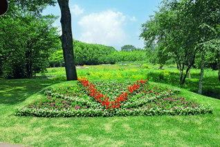 """花々の中に""""勝利のVサイン""""が浮かぶ。『新・人間革命』執筆の総仕上げをした長野研修道場で池田先生がカメラに収めた(8月)"""