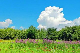 空と雲と森と花園と――なんと鮮やかな色彩のコントラスト。心が希望の空へ大きく飛翔していくよう(今月8日、池田先生撮影。長野研修道場で)