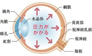 眼球断面の模式図